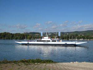 Der Rhein bei Ingelheim, Frei-Weinheim