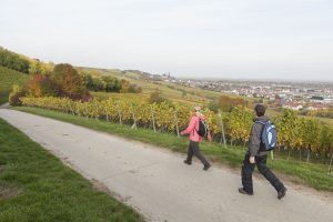 RheinTerrassenWeg mit Blick auf Oppenheim