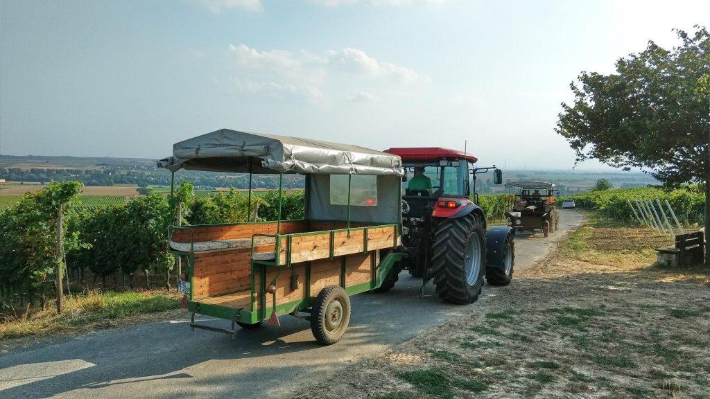 Pendelverkehr: Die Trecker holen die nächsten Weinprobierer