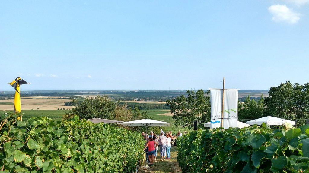 Weinprobe zur Selzer Kerb: Blick auf das Selztal