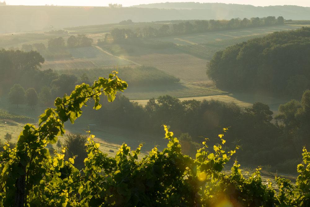 Dreibächeweg Laurenziberg Dünbachtal
