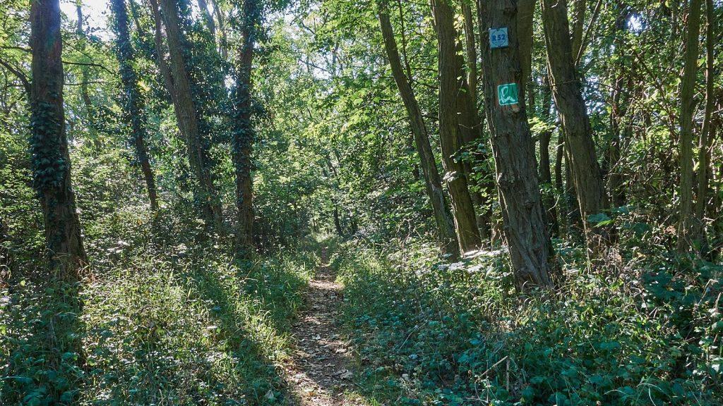Waldpfad der Hiwweltour Aulheimer Tal