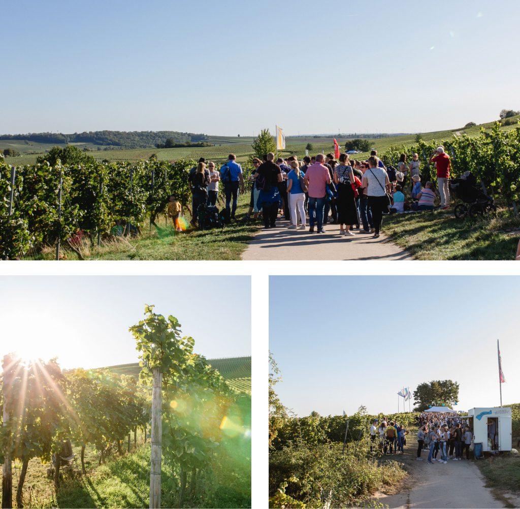 Weinlehrpfad in Bodenheim