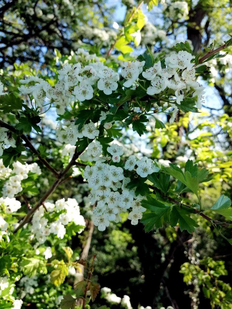 Blumen auf dem Westhofener-Wingertsheisjerweg