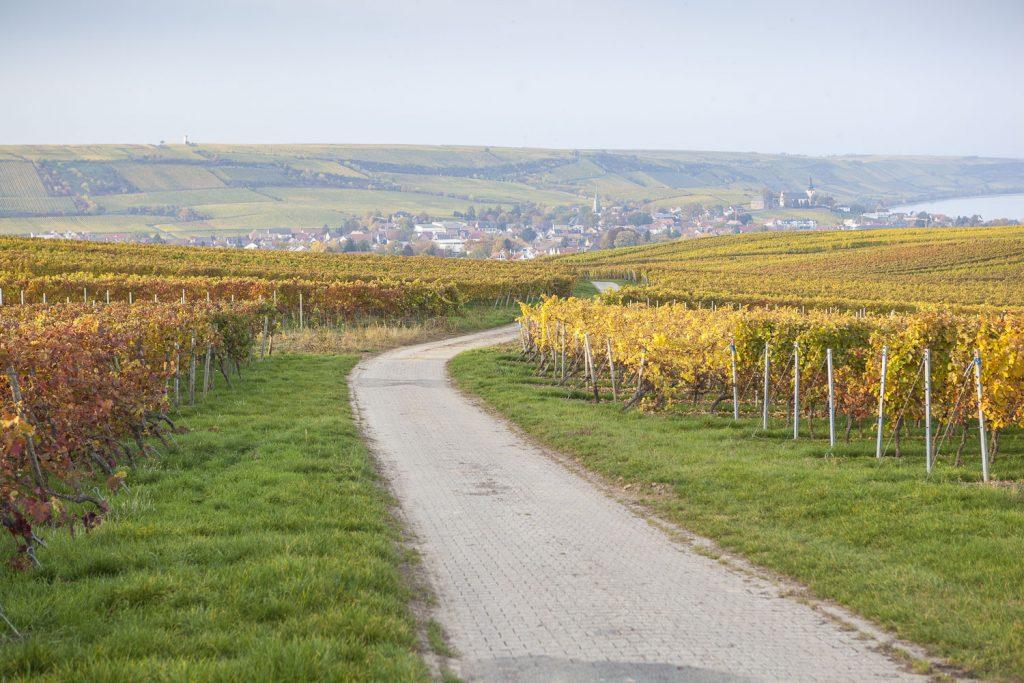 Blick auf den Roten Hang vom RheinTerrassenWeg