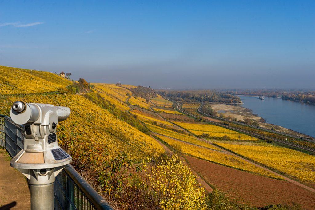 Blick vom Roten Hang am RheinTerrassenWeg