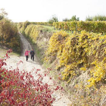 Wandern in Farbenpracht auf dem RheinTerrassenWeg