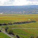 Wingertsschaukeln - Herbstliche Weinberge bei Sprendlingen-Gensingen DSC_5545