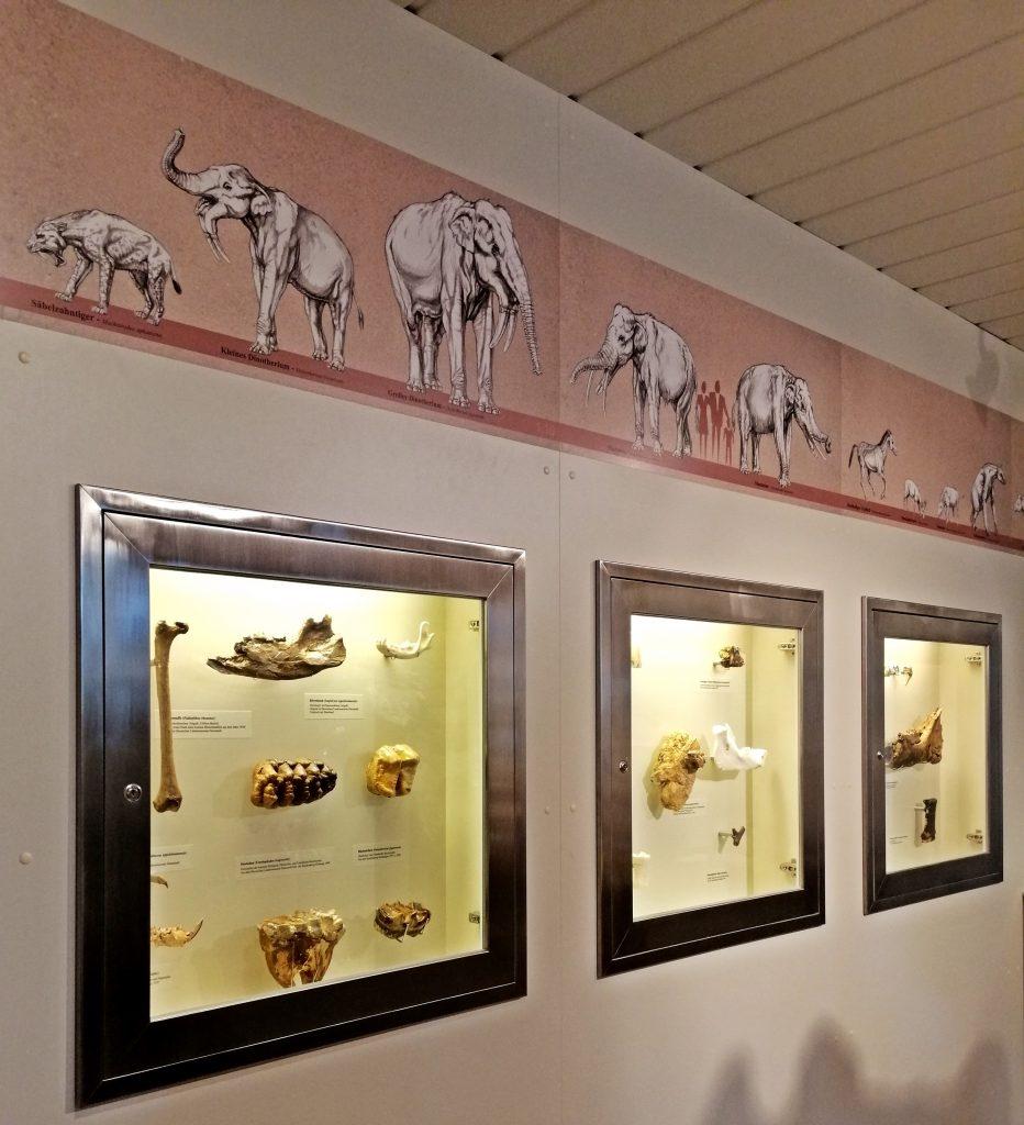 Dinotherium-Museum in Eppelsheim