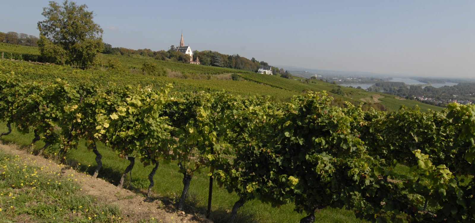 Hildegard von Bingen Blick auf die Rochuskapelle in Bingen