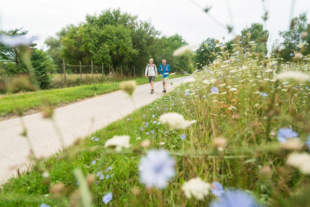 Wanderpaar mit Blumenwiese auf der Hiwweltour Westerberg