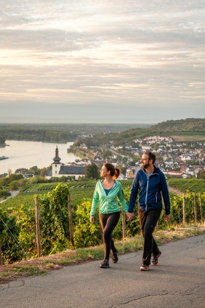 Blick vom Roten Hang am RheinTerrassenWeg in Rheinhessen